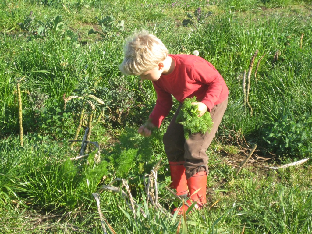 Rusty helps harvest greens for our dinner