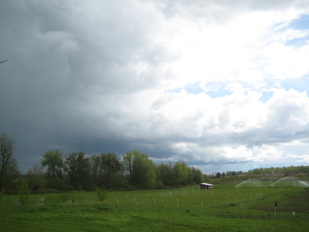 A curious sight: rain clouds passing by while sprinklers run (simply because they are connected to the line running to our greenhouse).