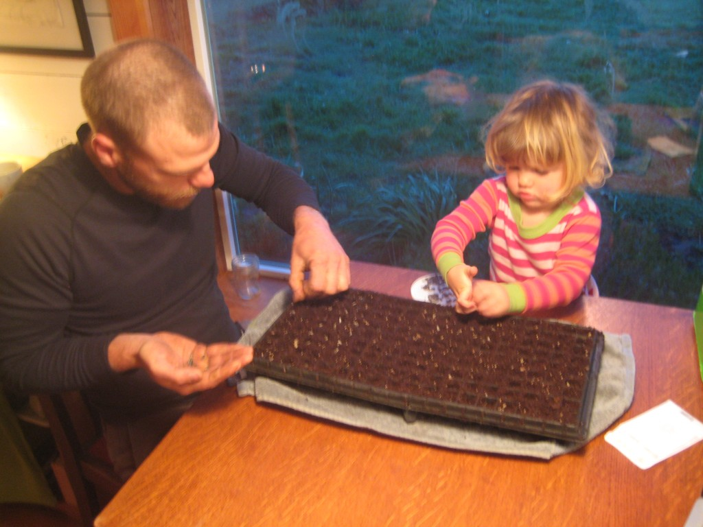 Sowing sunflowers before daybreak.