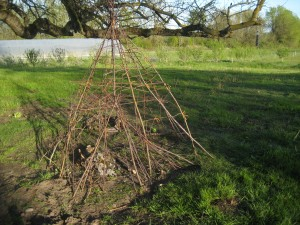 Stick tipi! Pruned branches from our orchard can be fun we learned!