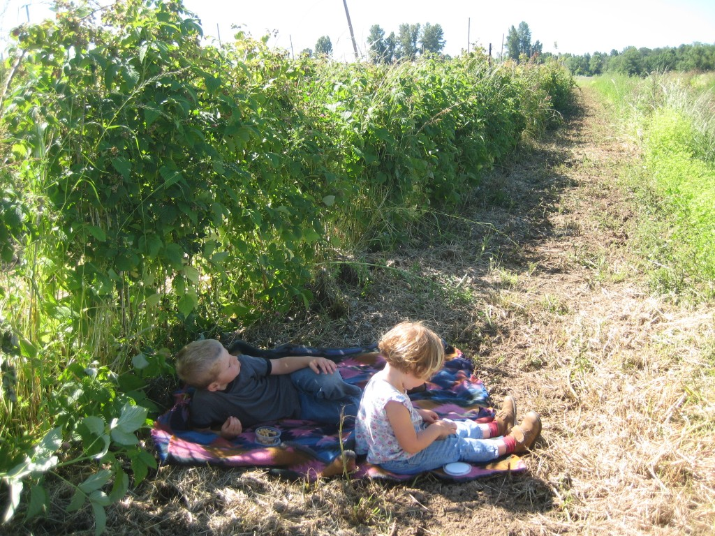 The kids and I sampled the first of the raspberries for our snack last week!