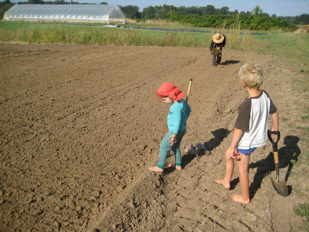 We recently planted next year's strawberry plants! The kids helped some too. This field is especially close to the house so that next June they can run out and gobble them up!