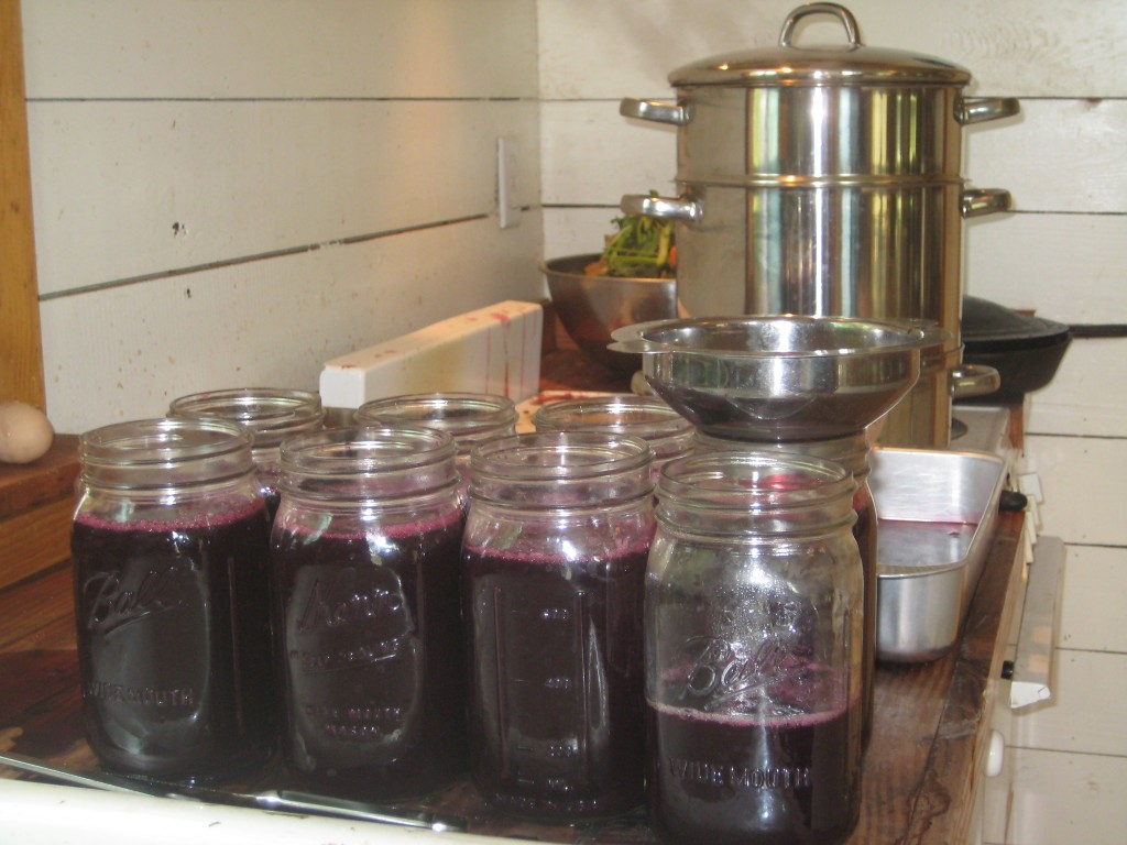 """One more kitchen picture. This summer we've been more relaxed than usual about """"putting up"""" food. But two weekends ago we made up for it by keeping our kitchen FULL of projects all Saturday long. Among other things, we steamed some grapes for juice. We froze it all for now and hope to turn it into jelly when the season quiets down more. We love that color!"""