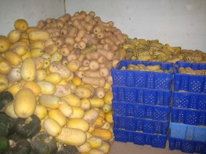 Mounds of squash! This is just SOME of it all!