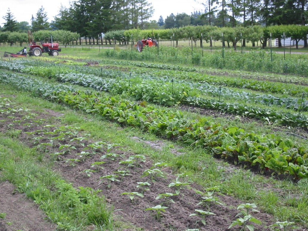 2006 - We farmed our little one acre of rented ground and kept it like a garden.