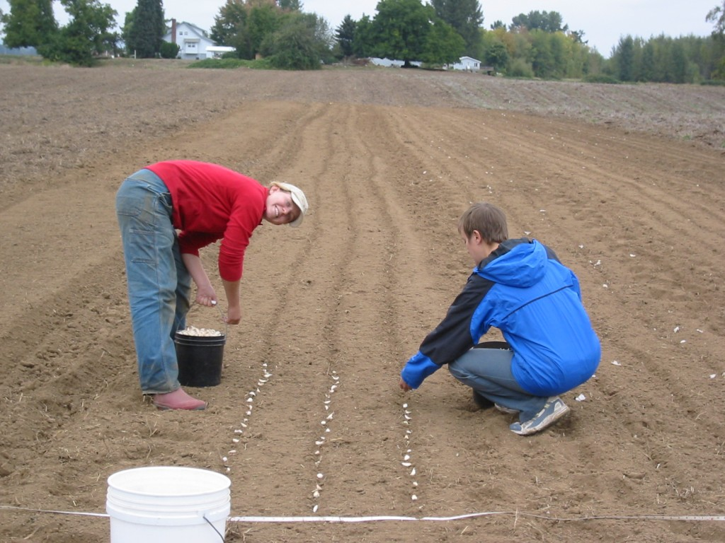 2006 - After a whirlwind year of activity, that fall we were planting garlic on our very own 17.5 acres that we bought here on Grand Island. That's where we've been ever since!