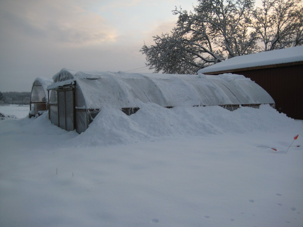 2008 - December. Snowmageddon hit Oregon, making us grateful for sturdy greenhouses. We also felt kind of bored and lonely being stuck on the farm for all those snow days, which led to some big changes in the following year ...