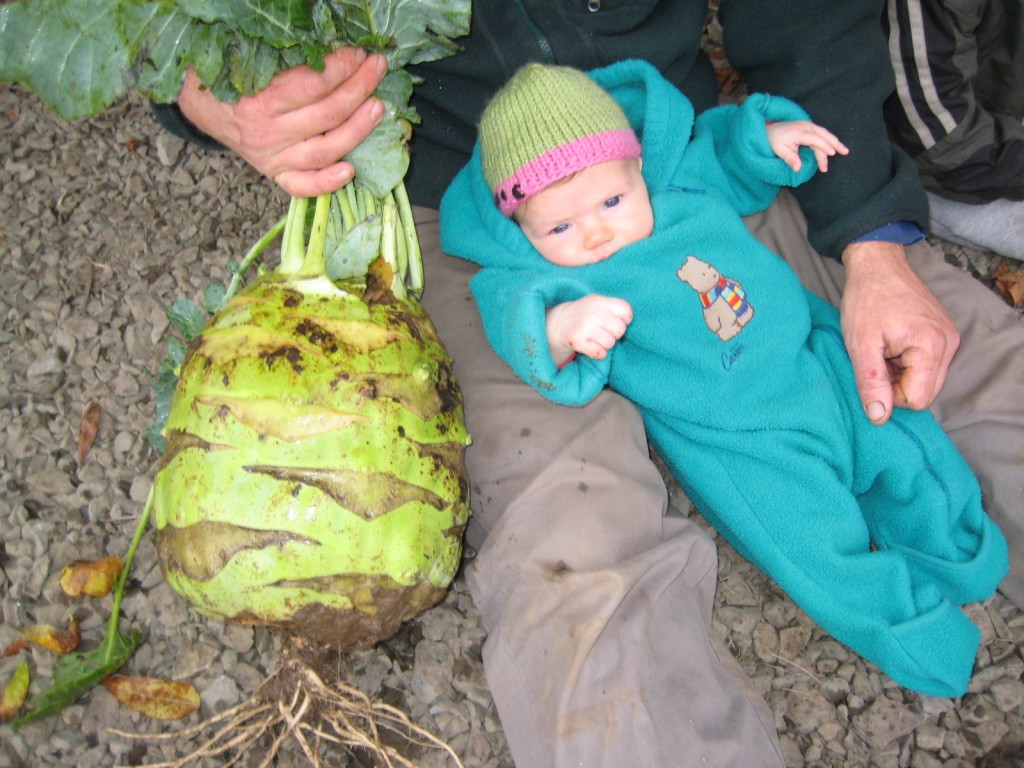 2012 - By Fall, we had a baby who was almost as big as our kohlrabi.