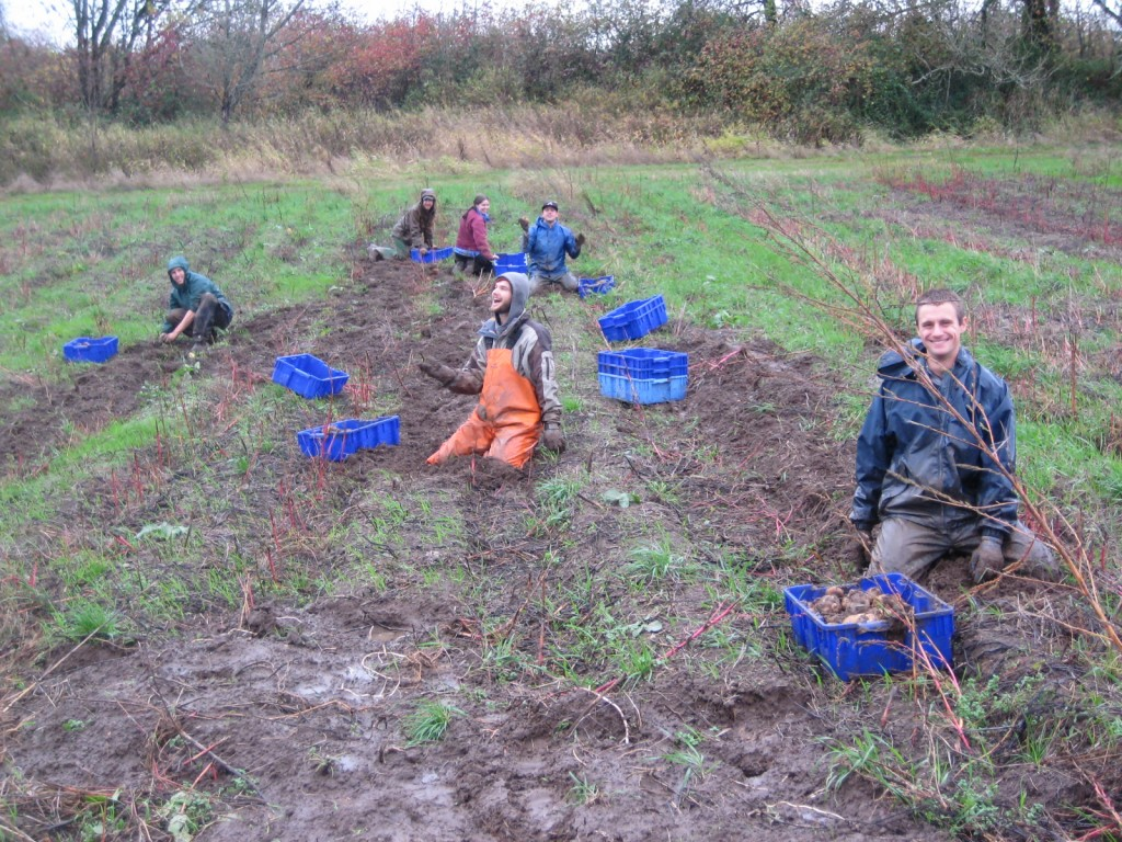2012 - We have been told many times over that this was one of the most memorable days for many of our (many) employees at the time — high water was predicted and we had to dig our potatoes before they flooded! The crew dug potatoes as fast as they could in a driving rainstorm. Fun was had, because it was just crazy.