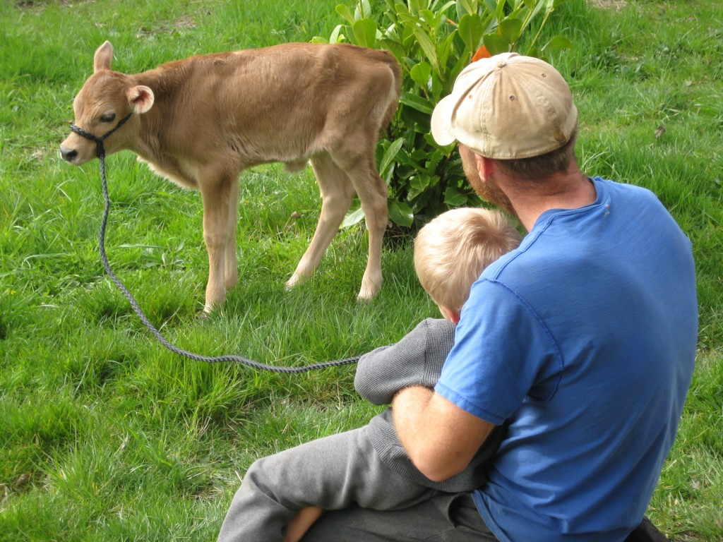 2013 - Many babies besides our own have now been born on the farm. The calves were often the most exciting (and cute too!).