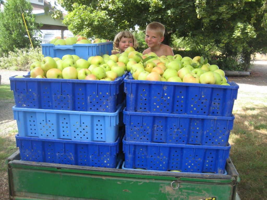 The kids celebrating the beginning of the apple harvest!
