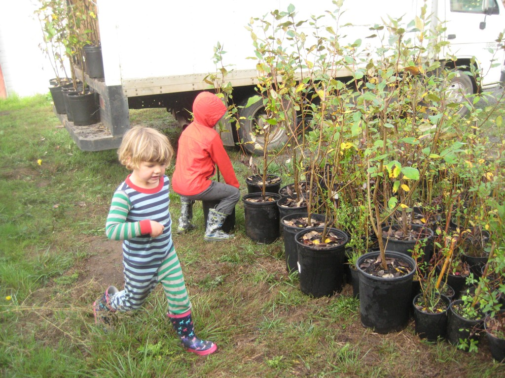 The kids helped to unload hundreds of native trees from our box truck this weekend.