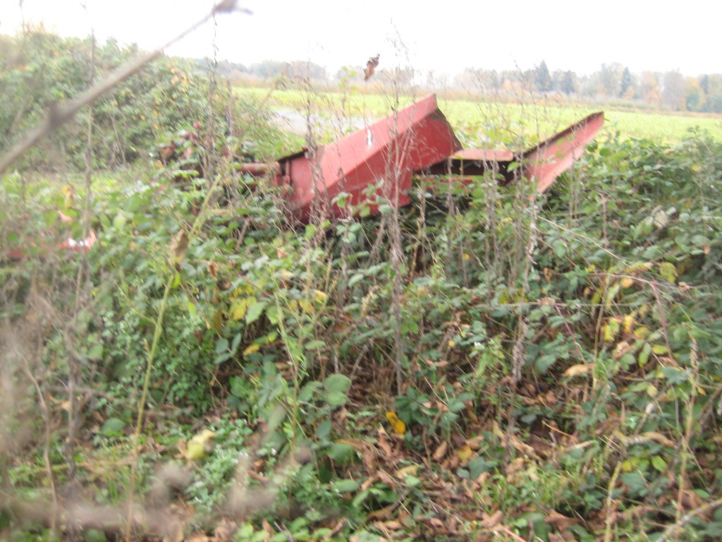 The blackberries are consuming the mower-conditioner that we need to sell now that we no longer make hay! (Photo by Rusty)