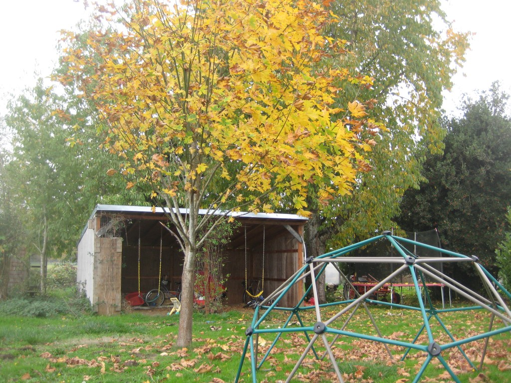"Rusty's maple tree is dressed for the season. Our ""play shed"" is a nice play for hanging out and swinging on cool/wet fall mornings too. (Photo by Rusty)"