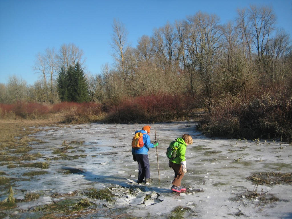 On a recent outing to Willamette Mission, the kids and I found a GIANT frozen-over puddle and had a blast crunching all over it.