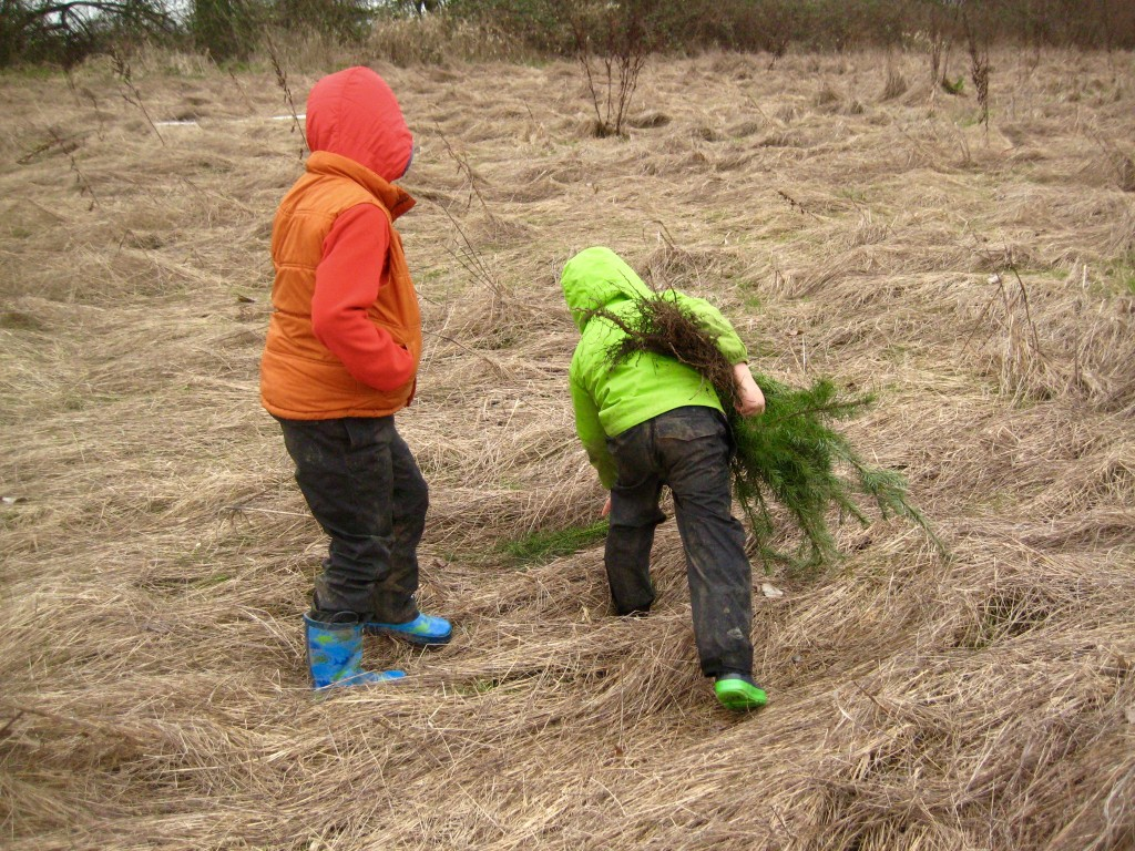 The kids helped plant Doug Fir trees in our lowest field this weekend.