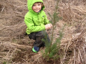 Dottie helped plant the Douglas Fir trees.
