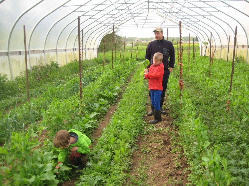 Most of the interesting action on our farm these days is still centered in our high tunnels. We are so grateful for them this year!